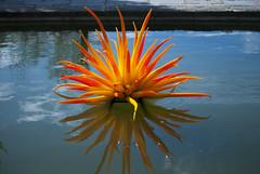 Orange Reflections (explore) (Rudi Pauwels) Tags: summer orange reflection water clouds reflections göteborg nikon sweden schweden gothenburg sverige botanicalgardens botaniska botaniskaträdgården d80 nikond80