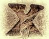 The X-Man (Jeff Clow) Tags: macro nature dallas texas lizard dfw anolelizard ©jeffrclow