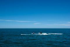 cruise newzealand people blackcat boat dolphin bankspeninsula akaroa hectorsdolphin jetskiers