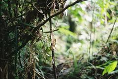 (Joseph Tarigan) Tags: green film analog 50mm fuji pentax ds mx c200 f19 yashinon