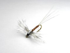 rusty spinner (ruffwatersflyfishing) Tags: adirondacks flyfishing spinner flytying saranacriver ausableriver johnruff adirondackflyfishing adirondackdryflies besttroutflies vision:mountain=057 vision:sky=068 vision:outdoor=0918