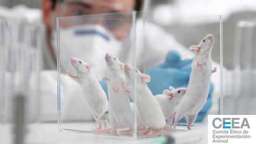 Jornada CMN 'Ética de la Investigación en Experimentación Animal: Nuevas Perspectivas'