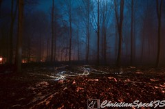 Molten Grounds (christian speck) Tags: trees lightpainting fog night forest 35mm outdoors schweiz switzerland suisse sony lausanne arbres lumiere nuit foret sauvabelin rx1 brouyard