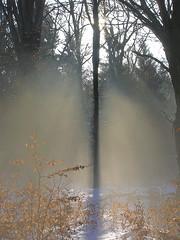 DSCN8219 Magischer Winterwald - A magical winter woods (baerli08ww) Tags: schnee winter sun mist snow fog backlight forest germany deutschland nikon nebel sonne wald morningsun gegenlicht rheinlandpfalz morgensonne westerwald rhinelandpalatinate supershot
