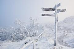 Wegweiser im Schnee (GeraldGrote) Tags: schnee winter snow day nebel explore brocken harz wegweiser
