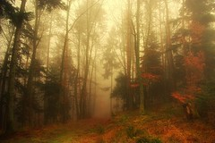 La forêt enchantée (mamietherese1) Tags: fog expression ngc soe lonelytree magicalmoments ourtime expressyourself coth littlestories callingallangels greatphotographers imagepoetry flickrsbest contemporaryartsociety fantasticnature abigfave innamoramento specialpicture alberoefoglia diamondclassphotographer flickrdiamond memoriesbook theunforgettablepictures overtheexcellence concordians flickrslegend kunstundnatur picswithsoul naturethroughthelens colorsofthesoul goldenart alittlebeauty sublimemasterpiece flickrswarmlighting absolutegoldenmasterpiece don'tworrybehappy qualitysurroundings photographymypassion coth5 sailsevenseas creativeoutbursts coppercloudsilvernsun goldsealings fugitivemoment fleursetpaysages theoriginalgoldseal exoticimage mygearandme mygearandmepremium mygearandmebronze mygearandmesilver mygearandmegold flickrsportal mygearandmeplatinum mygearandmediamond ringexcellence dblringexcellence tplringexcellence universeofphotography extraordinarilyimpressive vpu1 odetojoyodeàalegria flickrstruereflection1 flickrstruereflection2 eltringexcellence artcityart flickrsfinestimages1 flickrclickx magicalmoments2 vpu3 vpu4 vpu5 qualitysurroundings2 infinitexposure