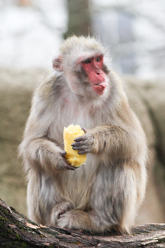 Bleh Monkey Melon by Mark Dumont, on Flickr