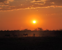 Sunset Frolic (The Spirit of the World) Tags: light sunset sun sunlight nature haze wildlife waterhole namibia finest zebras saltpan flickrs wildlifereserve images3 etoshanationalpark rememberthatmomentlevel1 flickrsfinestimages1 flickrsfinestimages2 flickrsfinestimages3 rememberthatmomentlevel2 rememberthatmomentlevel3 nationalparkofnamibia