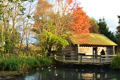London Wetland Centre (didemtali) Tags: city autumn england reflection bird london nature pond wildlife rustic sunny hammersmith southeast birdwatching