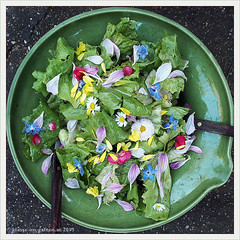 Sommersalat   2013-07 (Brigitte Rieser) Tags: flowers summer garden salad sommer jardin blüte edible salat garten salade ete essbare klasseimgarten wwwklasseimgartenat