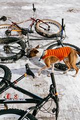 Rad Reportage: The Minneapolis River Bottoms on Fatbikes (John Watson / The Radavist) Tags: snow minneapolis mtb basenji salsa surly riverbottoms fatbike