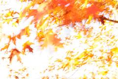 goldrush (ASTIA) Tags: autumn abstract leaves golden slowshutter