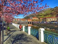 •Ya llega la primavera• #Tolosa #Guipuzcoa #Gipuzkoa #Udaberria #Primavera #Spring #Euskadi #Basque #BasqueCountry #Oria #River (alainmontillabello) Tags: guipuzcoa tolosa gipuzkoa udaberria primavera spring euskadi basque basquecountry oria river