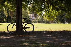 Tarde de bicicleta (Letua) Tags: bicicleta arbol verde parque lucesysombras bike green tree park lightshadow