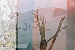 triple exposure (bazilikaruhu) Tags: analogue 35mm filmphotography canon analog analoguephotography filmcamera canonet28 analogica analogphotography rangefinder vintage filmisnotdead westillshootfilm ishootfilm kodak filmcommunity profoto100 colorfilm filmroll artwork 35mmfilmphotography expiredfilm tripleexposure plane tree plants exposure
