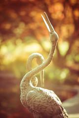 Dancing Cranes (Wade Brooks) Tags: 2017 dukegardens april dancing cranes wordlessonwednesday