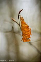 Sola (Francesca D'Agostino) Tags: foglia leaf bosco forest colori colors gambarie calabria fotoamatorigioiesi