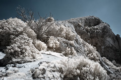 Close from the summit (Lolo_) Tags: ir infrared saintevictoire aixenprovence infrarouge sentier chemin virage montagne rando arbre tree dead mort provence