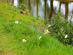 20170415_124532 (dkmcr) Tags: ruffordoldhall nationaltrust tudor heritage history lancashire daytrip attraction tourist rufford 15th april 2017