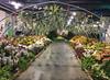 2017-03-19_0614i_waldor (lblanchard) Tags: 2017flowershow displaygarden waldor