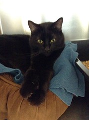 Ralph - 6 year old neutered male