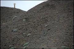 Find the Llama! (helkifotos) Tags: llama lama vicuna wildlife nature ecuador cotopaxi suchspiel
