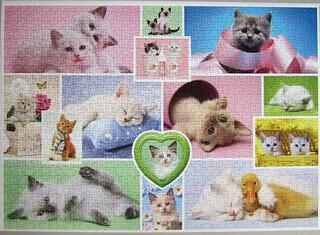 Schmusekatzen / Cuddly Cats