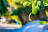 (davidson931) Tags: vede verde nature naturaleza natural green flotando colgante