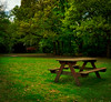 Project 365; #111 (iMalik1) Tags: project 365 days photo day challenge grass green park bench trees spring gilwell quiet peace peaceful lonely outdoors nature square crop forest woodland imalik photography ealing photographer canon eos 600d