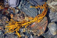 Heading towards the sea 2 (cheryl.rose83) Tags: water ripples rocks stream seaweed
