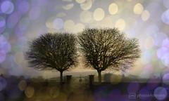 tearful dream (photos4dreams) Tags: twin trees gate gatter landschaft landscape mist morning nebel morgen photos4dreams p4d photos4dreamz friedhof hummetroth