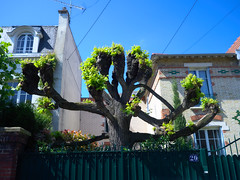 (Jean-Claude Randazzo) Tags: colombes olympus penf street printemps couleurs 17f18 captureone