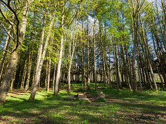 My forest (juanjo peñalver) Tags: mountain madera arbol aire tree bosque landscape scotland forest wood