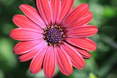 Morning flower (larryhartman2000) Tags: pollen