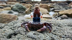 My Crusty Steed. (LegoKlyph) Tags: lego custom selfy me minifigure crab beach ride silly outside water animal nature sand rocks beard glasses klyph