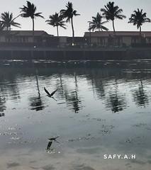 النورس (s_a_h_2009) Tags: النورس بحر ذوق redsea safyah سعادة صباحالخير المملكة جدة البحرالاحمر