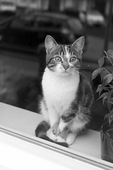 Guard cat (Martijn A) Tags: cat kat katze chat gato gatto feles guard bewaker bewachen gardien garde guardia praesidio blackandwhite zwartwit bw monochrome canon 550d dslr eos ef35mmf2isusm wwwgevoeligeplatennl
