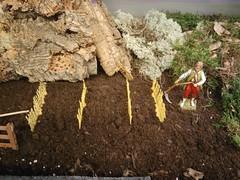 Wheat (Dams Dolls) Tags: pesebre pessebre belén belenismo betlehem christmas navidad