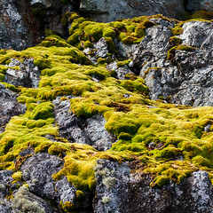 Growth (Danae Sheehan) Tags: rock antarctic colour pattern nature light detail square geology green emerald bright