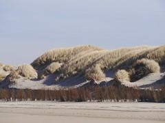 Duinen .... Dunes (Fijgje On/Off) Tags: duinen dunes zand sand rijshout brushwood strand beach helmgras ammophilabeachgrass ouddorp goereeoverflakkee zuidholland nederland netherlands fijgje panasonicdmcg5 lumixgvario100300f4056 mrt2017 apr2017