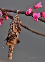Waiting (f4fwildcat...Tom Andrews Photography) Tags: spring redbudtree morning light drybrush stylize photoshop tenderleaves silkweb f4fwildcat tomandrewsphotography canoneos7d tamron