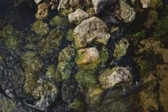 Nature #leaves #nature #rocks #streams #color #flow (jordansadowski) Tags: leaves nature rocks streams color flow