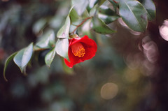 0409 PROVIA100F-58200028 (tsukasa*) Tags: carlzeiss planart1450zf rdpiii project365 catchycolors red