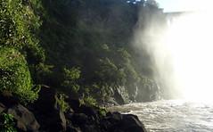 Wet Forrest