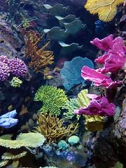 Coral (STEHOUWER AND RECIO) Tags: coral koraal underwater ocean colours news aquarium life nature natuur animals sealife anthozoa ecology