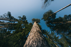 Squirrel perspective (JuNu_photography) Tags: tree view perspective squirrel climb fisheye finland