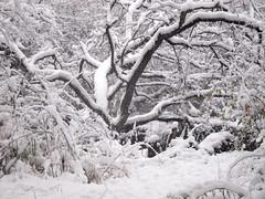 IMG_2835 (sjj62) Tags: s90 snow snowscape lith lakeinthehillsil winter winterscape