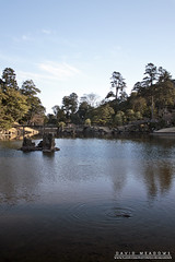 Photobombed By A Fish (DMeadows) Tags: davidmeadows dameadows davidameadows dmeadows japan japanese hikone castle history historic defence tourist tourism visit asia trip travel water reflect reflection reflections fish ripples tree trees wood woodland wooden leaves garden gardens