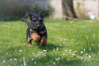 Puppy Power!!