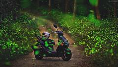 夏夜綠光精靈 (M.K. Design) Tags: 台灣 南投縣 埔里鎮 大坪頂 秘境 賞螢 螢火蟲 火金姑 綠光 閃閃 三陽 捷豹 長焦 自然 風景 長曝 夜拍 夜曝 淺景深 散景 壓縮感 尼康 生活 攝影 旅行 taiwan nantou puli nature landscapes longexposure nightimage firefly tele nikon d800e afs 105mmf14e bokeh sym jetpower motorcycle motor life photography travel